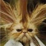 Consigli per ridurre lo stress dei gatti