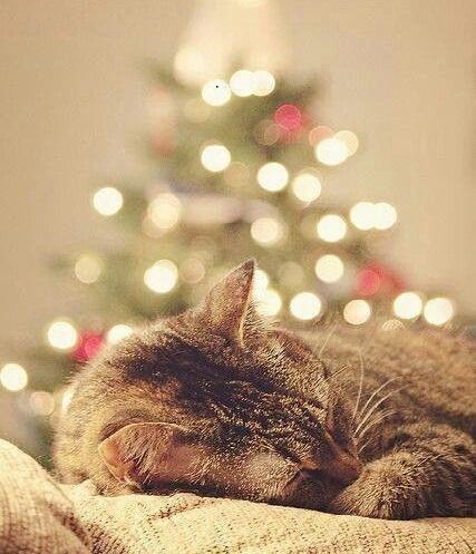 Regali natalizi per gatti. Cosa mettere sotto l'albero?