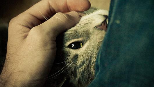 come il gatto dice grazie fusa