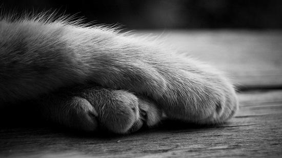 come superare morte gatto