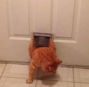 Gatto grasso non riesce ad entrare dalla porta video - Entrare in una porta ...