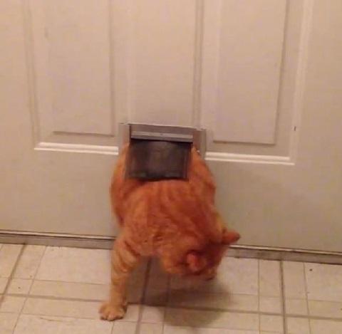 Gatto grasso non riesce ad entrare dalla porta [VIDEO]