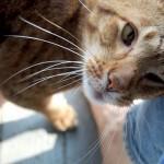 """Come il tuo gatto ti dice """"GRAZIE!"""""""