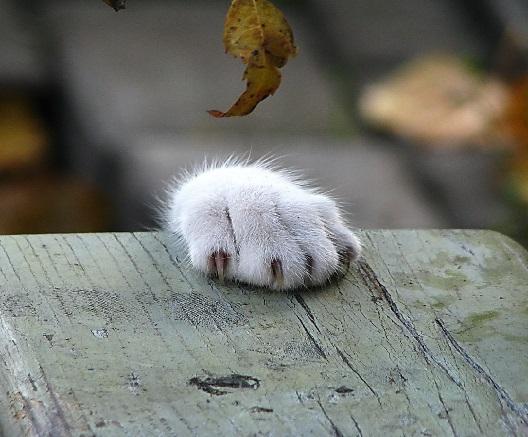 Come Superare La Morte Del Proprio Gatto