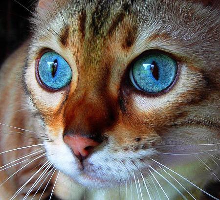 Rimedi naturali per migliorare la salute del tuo gatto