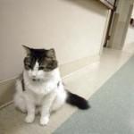 I gatti possono prevedere la morte degli umani?