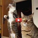 Gatto golosone mangia in piedi [VIDEO]