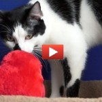Il gatto che odia San Valentino [VIDEO DIVERTENTE]