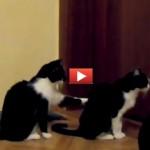 Gatto chiede scusa al suo a-micio [VIDEO]