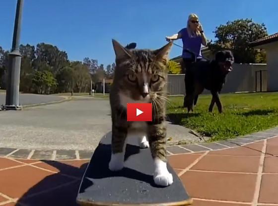 Le avventure del gatto sullo skateboard [VIDEO DIVERTENTE]