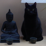 Cosa possono insegnarci i gatti