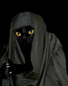 i gatti possono prevedere la morte degli umani