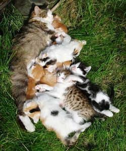 mamma gatta gattini incinta consigli