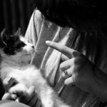 Cosa pensa di te il tuo gatto