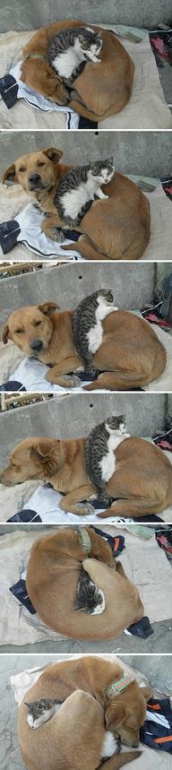 convivenza cane gatto