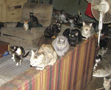 L'ambiente ideale per la crescita del tuo gatto