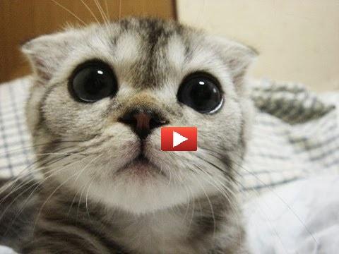 Gatti colpevoli chiedono scusa [VIDEO]