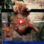 Gatti famosi for Pesce gatto acquario