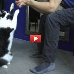 Gatto chiede le coccole [VIDEO]
