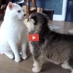 Un gatto mooolto paziente! [VIDEO]