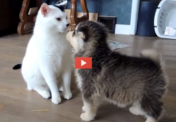 Un gatto mooolto paziente video for Youtube cani e gatti