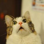 Cosa spaventa i gatti