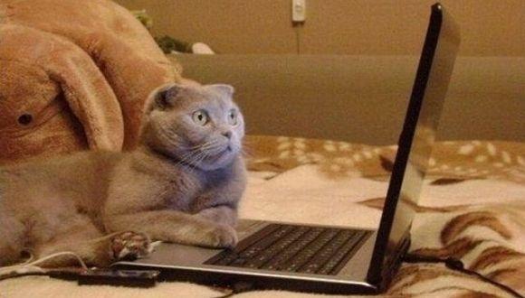 Cosa spaventa i gatti - Gatto defeca per casa ...