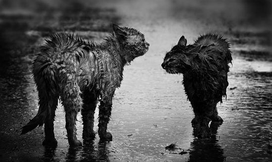 Come si comportano i gatti quando piove?