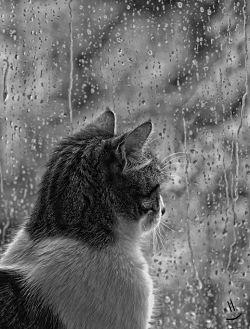 gatto pioggia comportamento