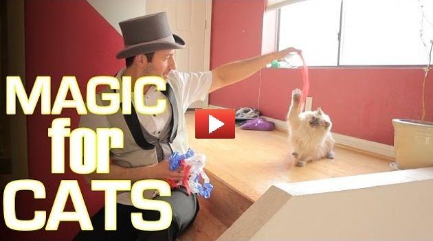 Ecco come reagiscono i gatti alla magia [VIDEO]