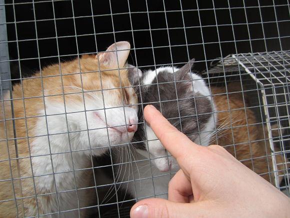 mondogatto gattile 2