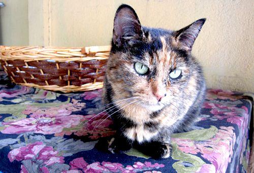 Un'oasi di pace per i gatti più sfortunati. Visita al gattile di Mondogatto