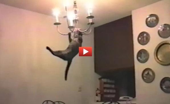 I 41 salti di gatto più inaspettati di tutti i tempi! [VIDEO]