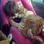 Chi ama i gatti è più intelligente di chi ama i cani. E' scientificamente provato!
