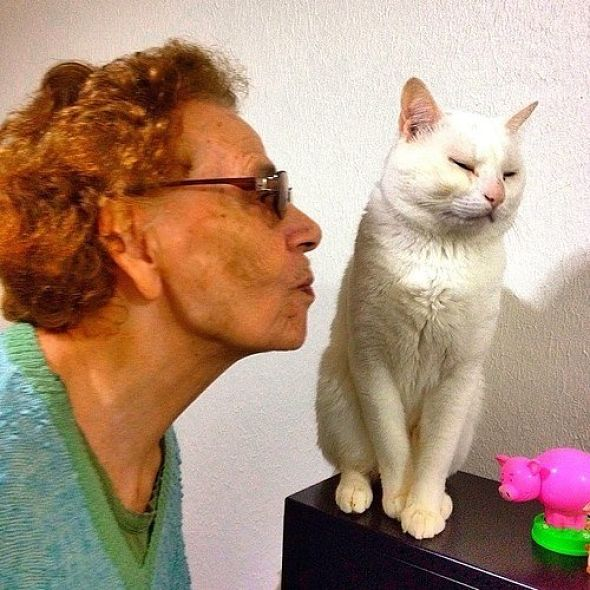 baciare gatti selfie