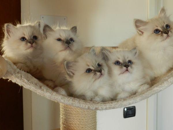 EXPO FELINA: in mostra i gatti più belli del mondo
