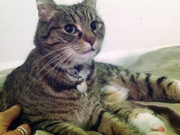 Freya, la gatta del ministro inglese diventa la mascotte dei senzatetto