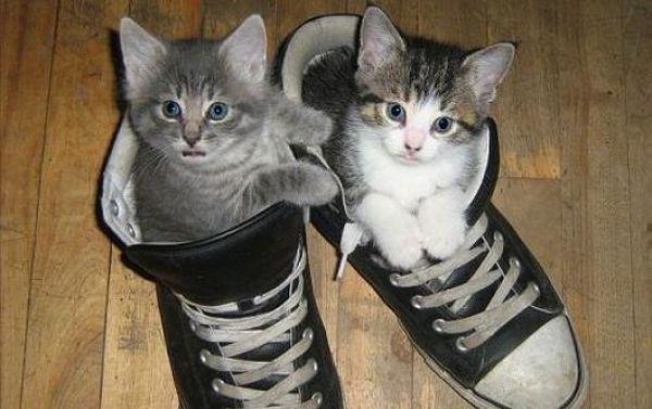Perchè i gatti annusano le scarpe maleodoranti?