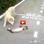 Gatto inganna cane fingendosi morto, ma all'improvviso… [VIDEO]