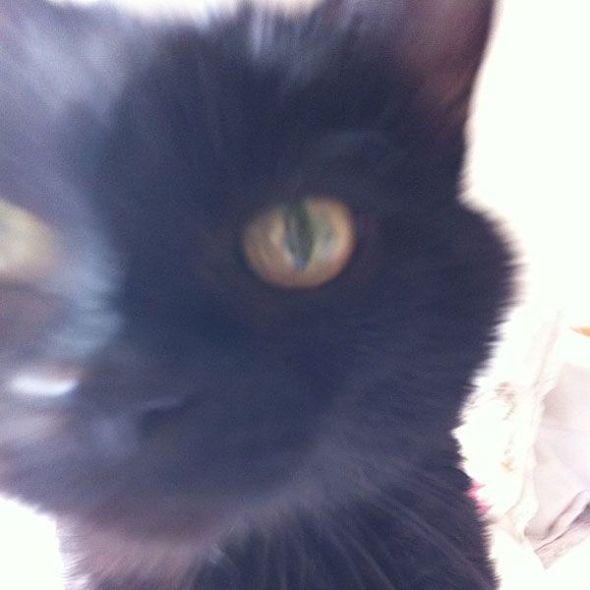 pelfie gatto selfie