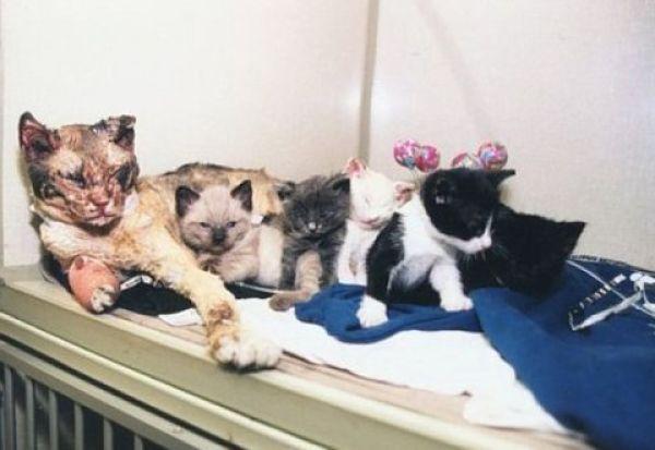 Scarlett, la gatta che sfidò il fuoco per i suoi cuccioli