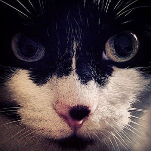 Ecco il pelfie il selfie di cani e gatti for Youtube cani e gatti