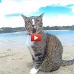 Le evoluzioni di Didga, il gatto che fa parkour [VIDEO]