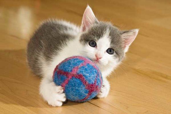Scopri se il tuo gatto davvero felice for Youtube cani e gatti