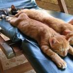 10 regole per portare il tuo gatto in vacanza