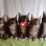 Che riflessi questi gattini! [VIDEO]