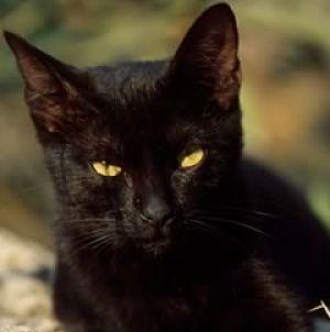gatto nero selfie