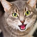 I gatti hanno poteri paranormali: lo dice uno scienziato