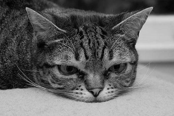L'ansia da separazione nei gatti