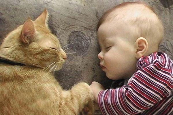 I gatti ci aiutano a vivere meglio
